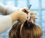 Corte de pelo imagen de archivo libre de regalías