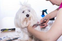 Corte de pelo del animal doméstico fotos de archivo libres de regalías