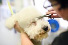 Corte de pelo del perro en cierre encima de la visión foto de archivo