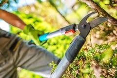 Corte de ramos da árvore do jardim foto de stock royalty free