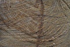 Corte de uma árvore 2 Fotos de Stock Royalty Free