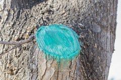 Corte de un árbol Fotos de archivo libres de regalías