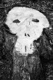 Corte de un árbol en la forma del scull tocón entonado Fotografía de archivo libre de regalías