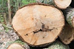 Corte de un árbol enfermo Fotos de archivo libres de regalías