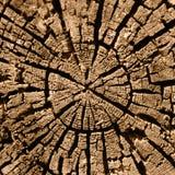 Corte de un árbol putrefacto foto de archivo libre de regalías