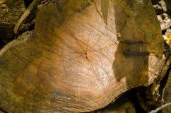 Corte del árbol, árbol del año, dentro de la madera Imagenes de archivo