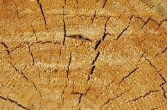 Corte del árbol Imágenes de archivo libres de regalías
