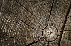 Corte del árbol Imagen de archivo libre de regalías