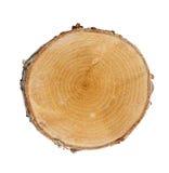 Corte del árbol Imagen de archivo