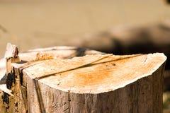 Corte del árbol Fotografía de archivo libre de regalías