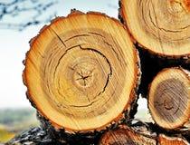 Corte del árbol Foto de archivo libre de regalías