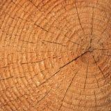 Corte del árbol de pino fotos de archivo