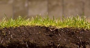 Corte del césped de la hierba verde Foto de archivo libre de regalías