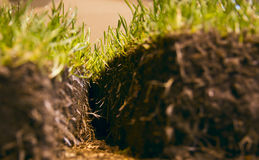 Corte del césped de la hierba verde Foto de archivo