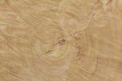 Corte del extremo de una textura grande del árbol Fotografía de archivo