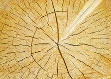 Corte del fondo del tronco de árbol Foto de archivo libre de regalías