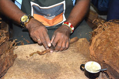 Corte del rodillo del cigarro Imagen de archivo libre de regalías