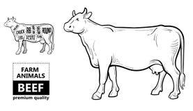 Corte do grupo da carne Diagrama do carniceiro do cartaz - vaca Desenhado à mão tipográfico do vintage Fotos de Stock