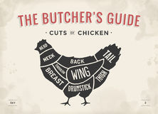 Corte do grupo da carne Diagrama do carniceiro do cartaz e esquema - galinha Desenhado à mão tipográfico do vintage Ilustração do Imagens de Stock Royalty Free