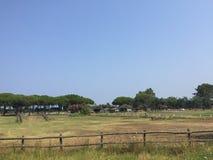 Corte do polo em Toscânia, Itália Fotografia de Stock