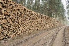 Corte e empilhe a madeira do pinho na floresta verde Fotos de Stock Royalty Free