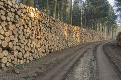 Corte e empilhe a madeira do pinho na floresta verde Foto de Stock Royalty Free