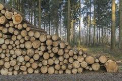 Corte e empilhe a madeira do pinho na floresta verde Fotografia de Stock