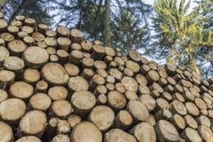 Corte e empilhe a madeira do pinho na floresta verde Imagens de Stock Royalty Free