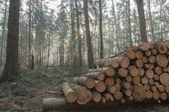 Corte e empilhe a madeira do pinho na floresta verde Fotos de Stock