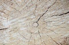 Corte el árbol Foto de archivo