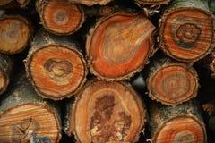 Corte el árbol imágenes de archivo libres de regalías