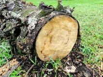 Corte el árbol con la corteza Imagen de archivo
