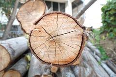 Corte el árbol de pino Imagenes de archivo