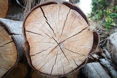 Corte el árbol de pino Fotografía de archivo
