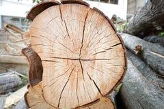 Corte el árbol de pino Imágenes de archivo libres de regalías