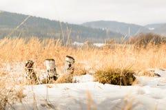 Corte el abedul en invierno con las montañas en el fondo Imagen de archivo