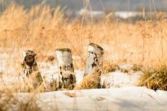 Corte el abedul en invierno con las montañas en el fondo Fotografía de archivo libre de regalías