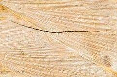 Corte el fondo de la textura del tronco de árbol Imagen de archivo