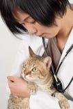 Corte el gato Fotografía de archivo libre de regalías