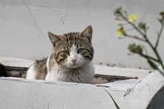 Corte el gato Fotos de archivo