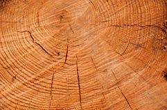 Corte el primer de la textura del pino Fotos de archivo