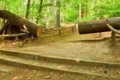 Corte el tronco Árbol grande caido abajo a la pequeña trayectoria en la primavera Forest Park Fotografía de archivo