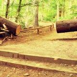 Corte el tronco Árbol grande caido abajo a la pequeña trayectoria en la primavera Forest Park Fotos de archivo