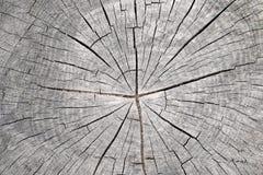 Corte el tronco de árbol - anillos anulares imagenes de archivo