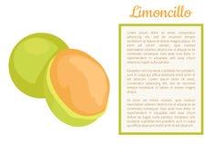Corte entero de la fruta de Limoncillo, cartel de la cal española libre illustration