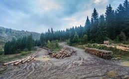 Corte entra a floresta enevoada Imagens de Stock