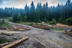 Corte entra a floresta enevoada Fotos de Stock Royalty Free