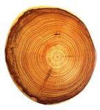 Corte hermoso del árbol Foto de archivo