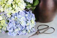 Corte la hortensia y las fuentes que cultivan un huerto Fotografía de archivo libre de regalías