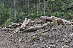 Corte la madera en una pila fotografía de archivo